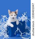 white calico kitten inside of a ... | Shutterstock . vector #1330401047