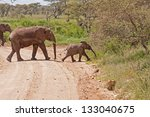 Постер, плакат: Elephant herd with calf