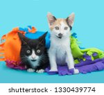 two kittens  a white calico and ... | Shutterstock . vector #1330439774