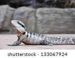 eastern water dragon ... | Shutterstock . vector #133067924