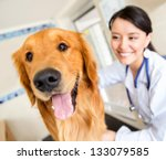 Stock photo cute dog at the vet getting a checkup 133079585
