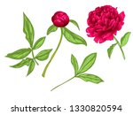 vector red peony floral... | Shutterstock .eps vector #1330820594