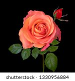 illustration with rose flower... | Shutterstock .eps vector #1330956884