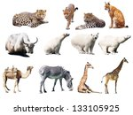 set of  animals. isolated over... | Shutterstock . vector #133105925