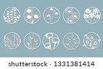 set. chamomile  echinacea ... | Shutterstock .eps vector #1331381414
