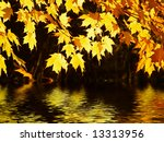 Glowing canopy of maple leaves backlit by the sun reflected in water - stock photo