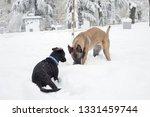 dog  shepherd  german  animal ... | Shutterstock . vector #1331459744