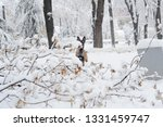 dog  shepherd  german  animal ... | Shutterstock . vector #1331459747