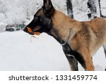 dog  shepherd  german  animal ... | Shutterstock . vector #1331459774