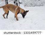 dog  shepherd  german  animal ... | Shutterstock . vector #1331459777