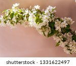blooming apple tree branches... | Shutterstock . vector #1331622497