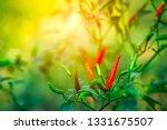 Red Chilli Pepper Tree Garden - Fine Art prints