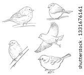 vector sketch of birds  hand... | Shutterstock .eps vector #1331676161
