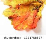 autumn fall leaves on white...   Shutterstock . vector #1331768537