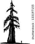 black and white,branch,drawing,forest,illustration,national,nature,park,redwood,solitude,tree,trunk,vector,west