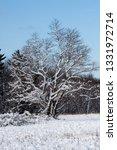 tree during the winter season   Shutterstock . vector #1331972714