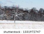 tree during the winter season   Shutterstock . vector #1331972747