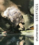 Stock photo close up african spurred tortoise resting in the garden slow life tortoise sunbathe on ground 1331973221