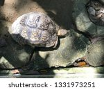 Stock photo close up african spurred tortoise resting in the garden slow life tortoise sunbathe on ground 1331973251