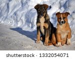 2 little puppies walk in the... | Shutterstock . vector #1332054071