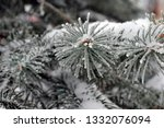 fir branches in hoarfrost. snow ... | Shutterstock . vector #1332076094