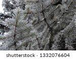 fir branches in hoarfrost. snow ... | Shutterstock . vector #1332076604