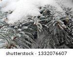 fir branches in hoarfrost. snow ... | Shutterstock . vector #1332076607
