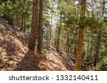 hiking trail in the woods | Shutterstock . vector #1332140411