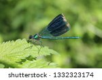 Stock photo dragonfly on a green background of forest nature 1332323174