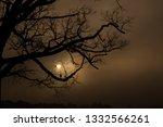 A Barren Oak Tree Is...