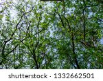 the branches of tree stand... | Shutterstock . vector #1332662501