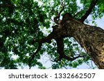 the branches of tree stand... | Shutterstock . vector #1332662507
