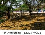 chiangmai  thailand. march  12... | Shutterstock . vector #1332779321