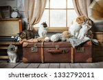Stock photo group of cute striped kittens basking on a suitcase with balls of yarn near the window 1332792011