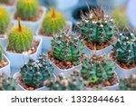 green castus in garden    Shutterstock . vector #1332844661