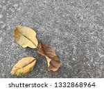 close up yellow dry leaves on... | Shutterstock . vector #1332868964