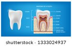 The Anatomy Of The Tooth. The...