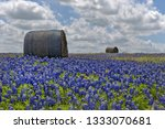 Bluebonnet Field With Hay Bales ...