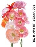 studio shot of pink and orange... | Shutterstock . vector #133307081