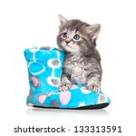 Stock photo cute little kitten with fleece bootee isolated on white background 133313591