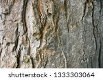 tree bark texture  old bark... | Shutterstock . vector #1333303064