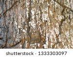 bark tree texture | Shutterstock . vector #1333303097