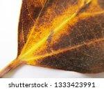autumn fall leaves on white...   Shutterstock . vector #1333423991
