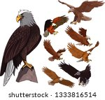 eagle icons colored cartoon... | Shutterstock .eps vector #1333816514