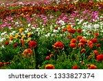 Carlsbad Flower Fields March...