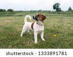 puppy jack russell played on... | Shutterstock . vector #1333891781