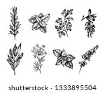 hand drawn sketch of herbs and... | Shutterstock .eps vector #1333895504