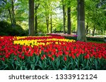 tulip bloom in keukenhof flower ... | Shutterstock . vector #1333912124