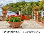 a summer garden by the sea....   Shutterstock . vector #1334069147