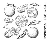 orange fruit vector drawing set.... | Shutterstock .eps vector #1334260037